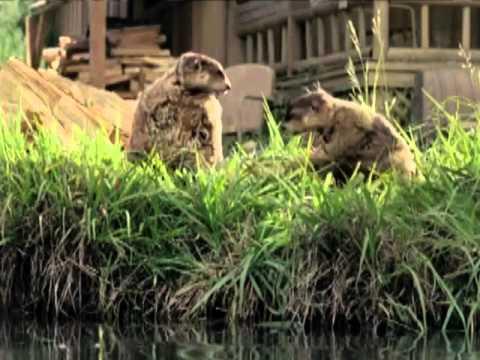 Geico Commercials Part1 - Cavemen, Woodchucks, Little Piggy and more!