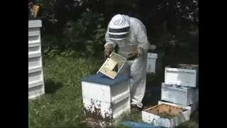Видео-инструкция. Система Никот для вывода качественных пчелиных маток.