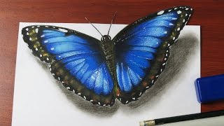 getlinkyoutube.com-How to Draw a Realistic Butterfly