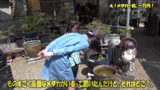 getlinkyoutube.com-え!、メダカ一匹、一万円?