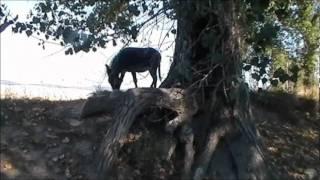 In giro per la campagna con cavallo e asino - Castelnuovo Misericordia (LI)