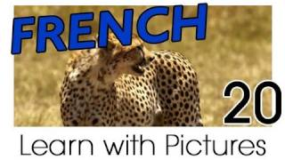 getlinkyoutube.com-Learn French - French Safari Animals Vocabulary