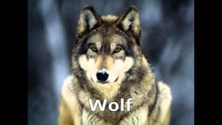 getlinkyoutube.com-Дэлхийн ТОП 10 зодооны нохой