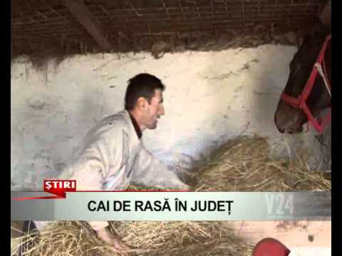 cai de rasa in judet    www v24tv