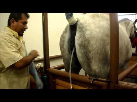Transferencia de embriones en equinos UNAM