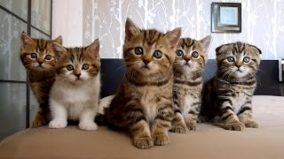 The Best Funny Playing Cats And Dancing Kittens Compilation   Try Not To Laugh !