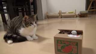 getlinkyoutube.com-ポチっと押したら猫が出る!? Cat piggy bank and Amie