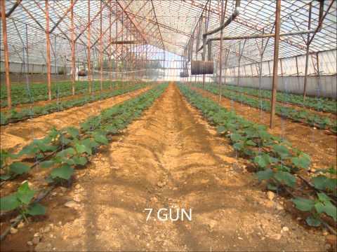 roa natura mikrobiyal gübre roa plus organik sıvı gübre.wmv