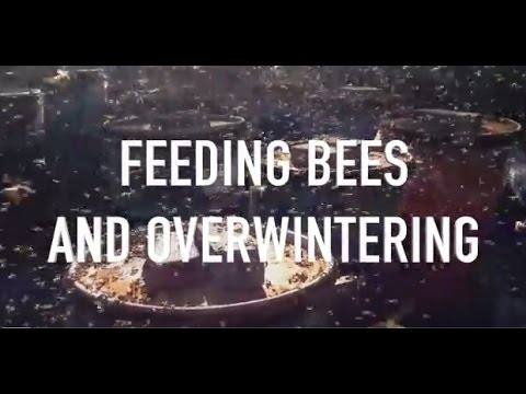 Feeding Bees and Overwintering