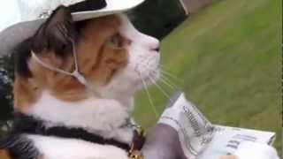 חתולונובלה המרד