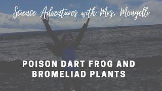 getlinkyoutube.com-Poison Dart Frog and Bromeliad Plants