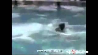 getlinkyoutube.com-Whale Kills Trainer Orlando Seaworld ACTUAL FOOTAGE