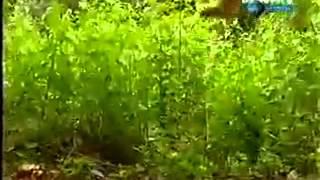 getlinkyoutube.com-जंगल का राजा से पंगा