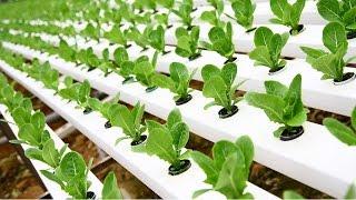 getlinkyoutube.com-Cómo tener Cultivos Hidropónicos - TvAgro por Juan Gonzalo Angel