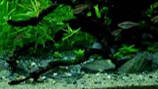 getlinkyoutube.com-砂礫系底床で砂場付きの水草水槽を作る【その2】