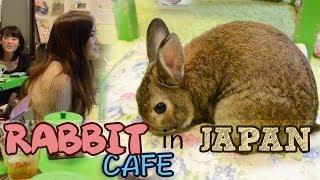 Rabbit Cafe in JAPAN!