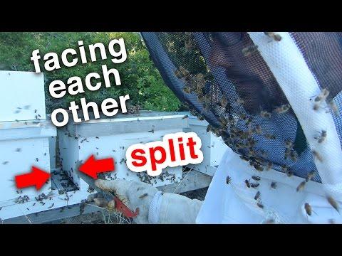 Beekeeping - The Even Split - Splitting the hive