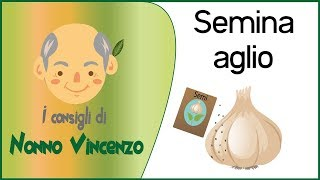 getlinkyoutube.com-SEMINA AGLIO