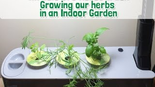 getlinkyoutube.com-Easy Indoor Garden with Miracle Gro AeroGarden