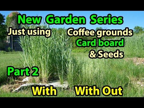 Coffee Grounds, Cardboard & Seeds - No Till Vegetables Gardening Series for Beginners 101. Pt 2