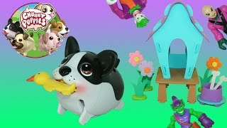 getlinkyoutube.com-Chubby Puppies Boston Terrier Hop and Waddle Shoo Joker Green Goblin & Luthor out of his Dog House