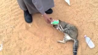 أجمل فيديو قطة مسكينة في الصحراء في مصر