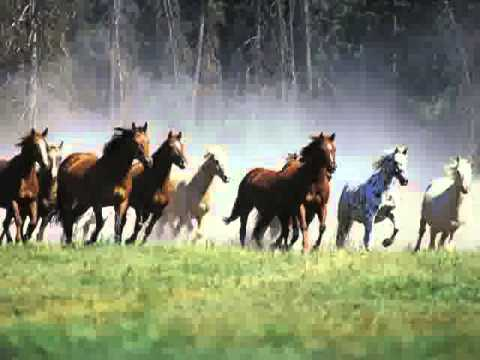 Cavalos Selvagens [2003] - Ensaio Gravado - TOMAHAWK