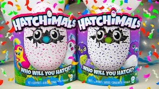 getlinkyoutube.com-Hatchimals Unboxing Birthday Party Toys for Girls Surprise Eggs Toy Hatchy Birthday Kinder Playtime