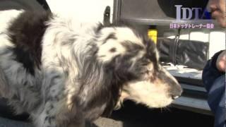 getlinkyoutube.com-JDTA保護犬支援プロジェクト 活動報告(2011/4/29)