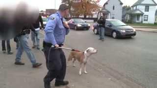 كلب بيت بول يهجم على كلبين و إيقافه تطلب تدخل الشرطة و كل سكان المنطقة Pit bull attack