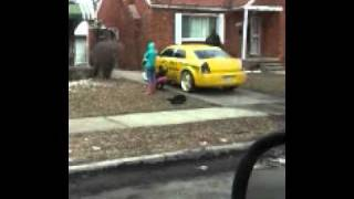 getlinkyoutube.com-Hood RATS in detroit bad move