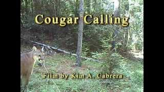 getlinkyoutube.com-Cougar / Mountain Lion Calling