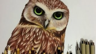 getlinkyoutube.com-Desenhando Coruja Realista / Drawing Realistic Owl