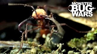 Most Unusual Critter Battles | MONSTER BUG WARS