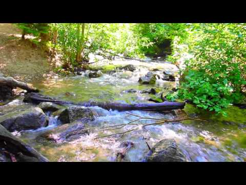 432Hz ~ Schumann's Resonance Nature Stream - Nature Meditation