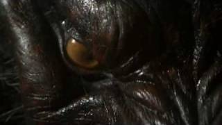 getlinkyoutube.com-Never Cry Werewolf - Werewolf Transformation