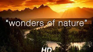 "getlinkyoutube.com-""Wonders of Nature"" 1 HR Amazing Nature HD Relaxation Video 1080p"