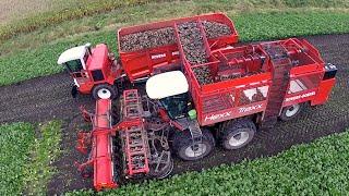getlinkyoutube.com-12 row Sugarbeet harvesting | Rovers Boekel l Holmer / Agrifac Hexx Traxx 12 | Gilles overlaadwagen