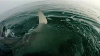 Best Shark Attack Video