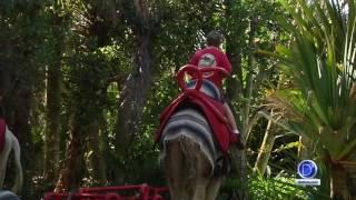 No se pierda de los Paseos en Camello que ofrece el Zoológico de Naples
