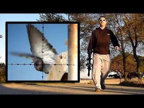 Air Rifle Pigeon Hunting Slow-Motion (Nov 4, 2010)