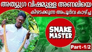getlinkyoutube.com-Vava Suresh with Dangerous & Aggresive Pregnant Russell's Viper | SNAKE MASTER 10-03-2016
