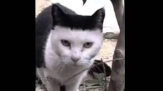 getlinkyoutube.com-してみらんね!! 長崎弁でしゃべる猫。。。@横浜まじさく