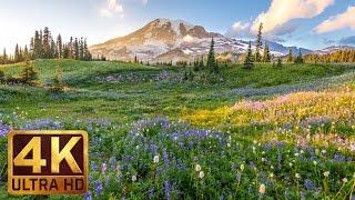 getlinkyoutube.com-(3 hours) 4K UHD Relaxation video: Mount Rainier National Park Washington State, Nature Sounds - 1