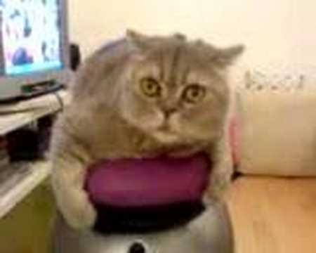 Cat Riding on Roomba