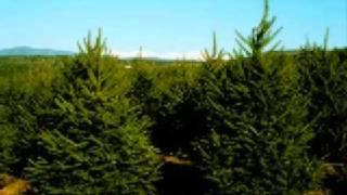 Trees suck Jimmy Norton