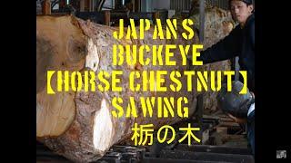 getlinkyoutube.com-栃の木の製材