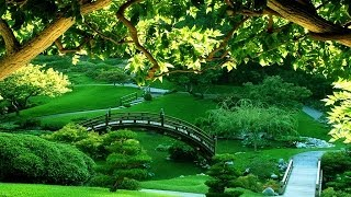 getlinkyoutube.com-Meditation Relaxing Music | Bamboo Flute`s Melody | Respect this Anthem | It will change you