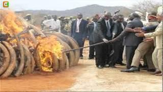 getlinkyoutube.com-Kenyatta Presides Over Burning of 15 Tonne Ivory Stockpile