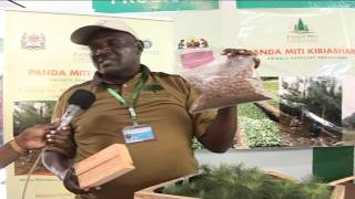 Private Forestry Programme (PFP) in Sabasaba